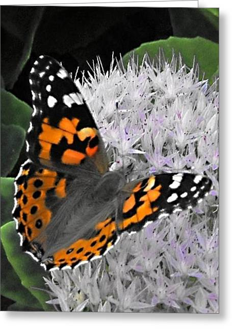 Greeting Card featuring the photograph Monarch by Photographic Arts And Design Studio