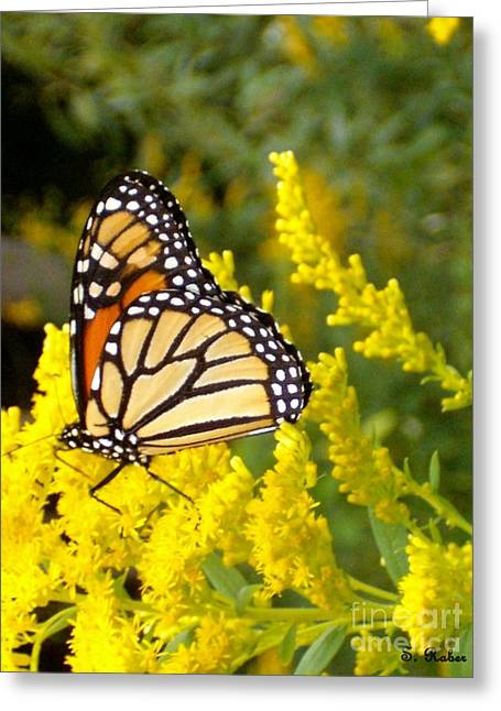 Greeting Card featuring the photograph Monarch by Sara  Raber