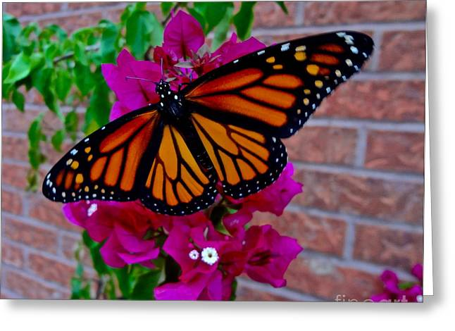 Greeting Card featuring the photograph Monarch by Sarah Mullin