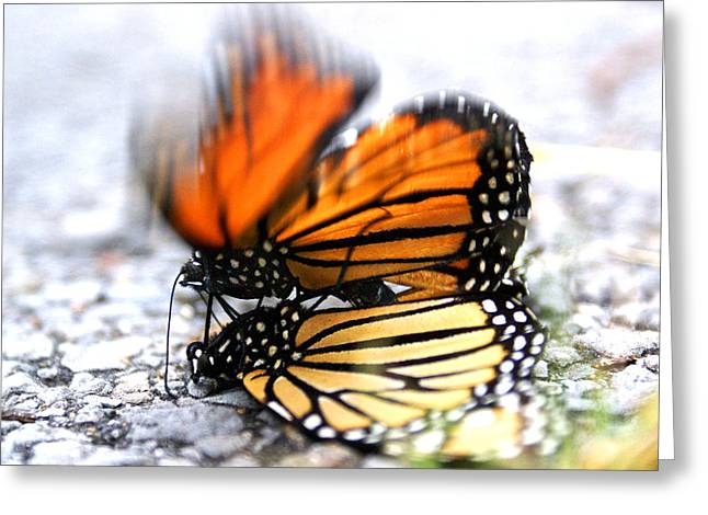 Monarchs In Love Greeting Card
