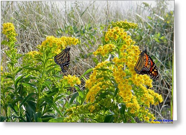Monarchs On The Beach Greeting Card by Nance Larson