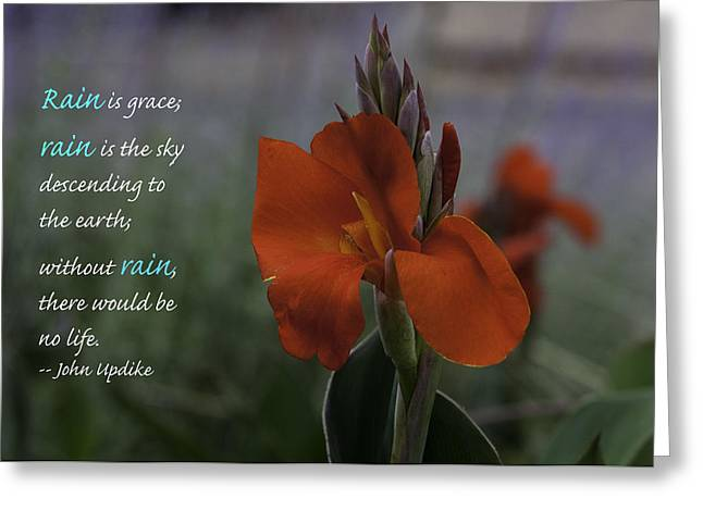 Monday Motivation - Red Canna Greeting Card by Martha Burger