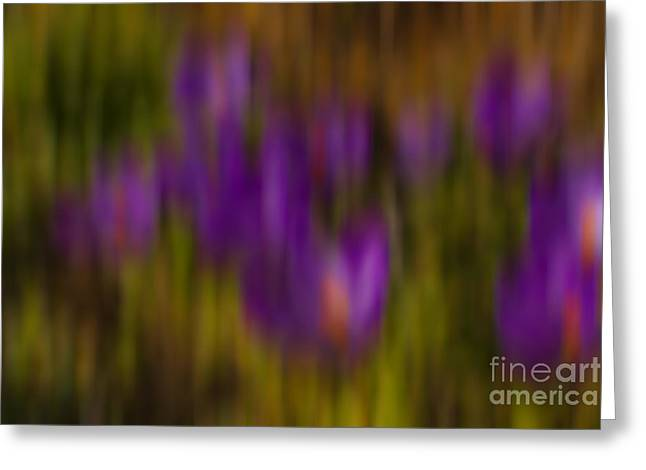 Greeting Card featuring the photograph Monet's Garden by Sandi Mikuse