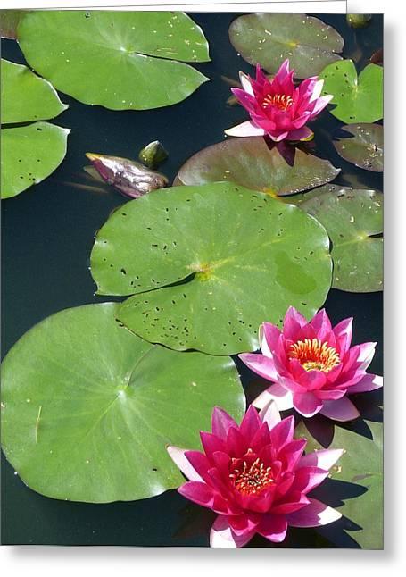 Monet's Waterlilies IIi Greeting Card