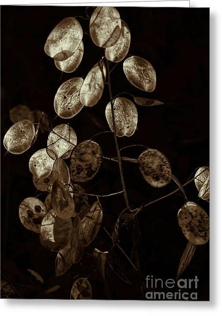 Money Plant Greeting Card by Jeff Breiman