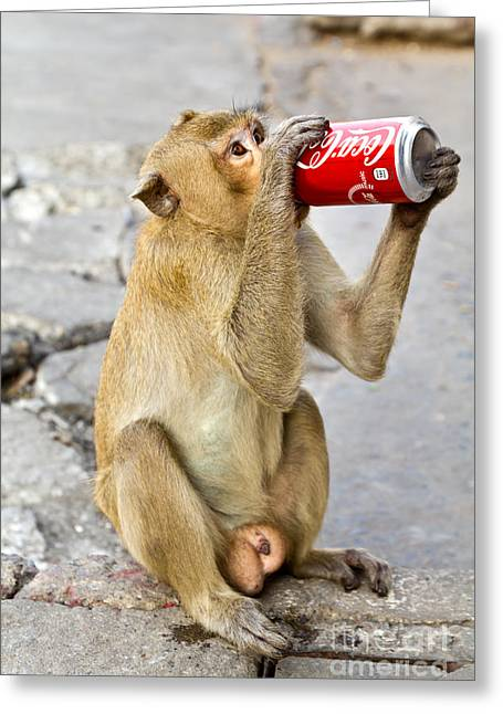 Monkey Enjoys Drinking Greeting Card