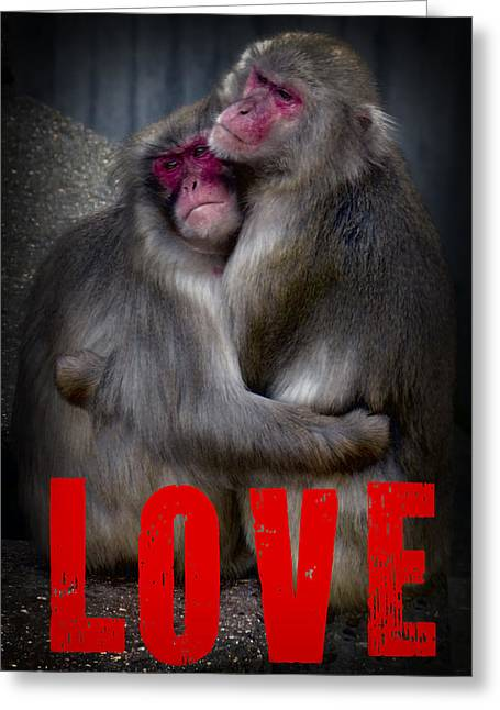 Monkey Love Greeting Card by Daniel Hagerman