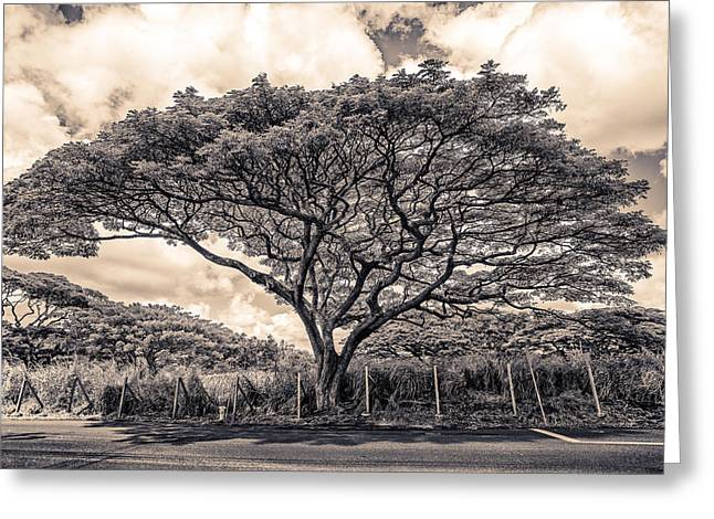 Monkey Pod Tree Greeting Card by Robert  FERD Frank