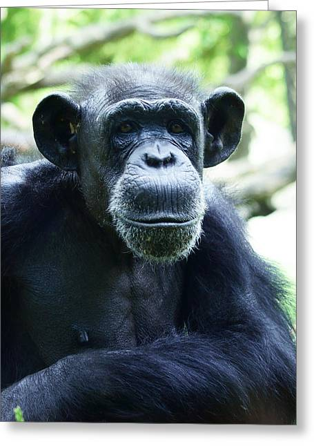 Greeting Card featuring the photograph Monkey See Monkey Do by B Wayne Mullins