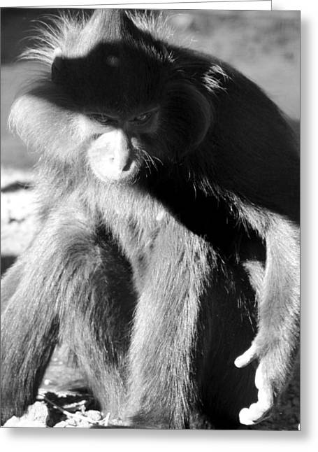 Monkey See Monkey Do Greeting Card by Dick Botkin