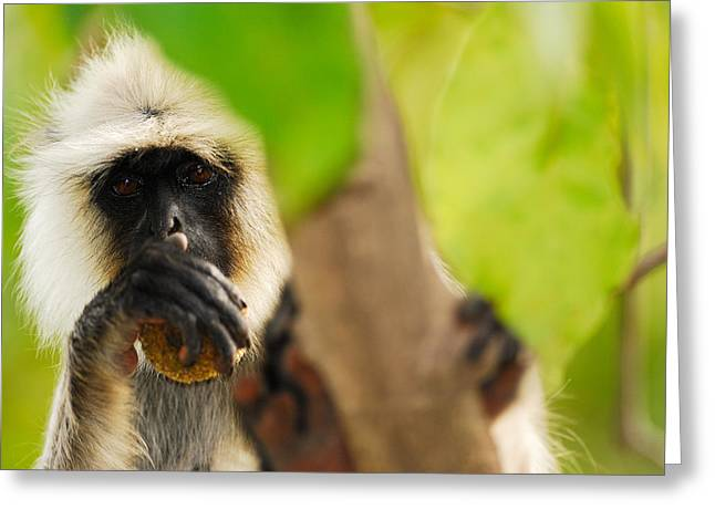 Monkey See Greeting Card by Stefan Carpenter