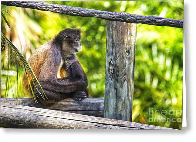 Monkey Sitting Greeting Card by Stephanie Hayes