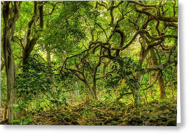 Monkeypod Forest Greeting Card
