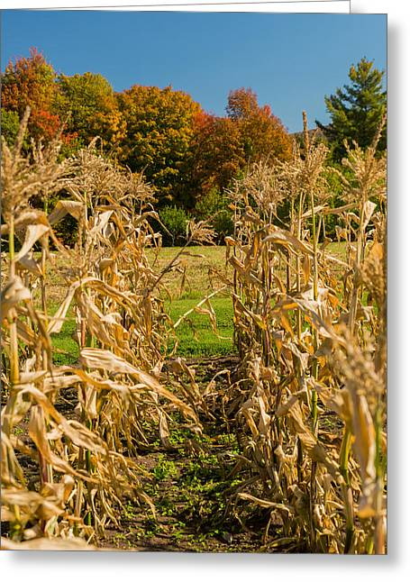 Monks Fall Corn Field Greeting Card