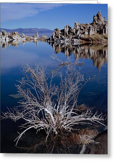 Mono Lake Salt Bush Greeting Card