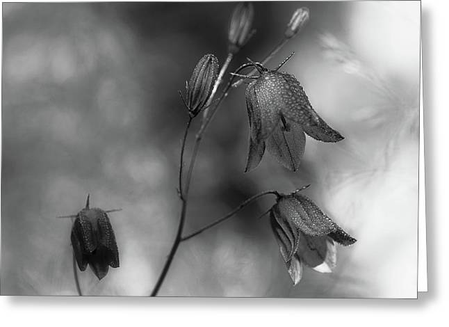 Monochrome Bluebells Greeting Card