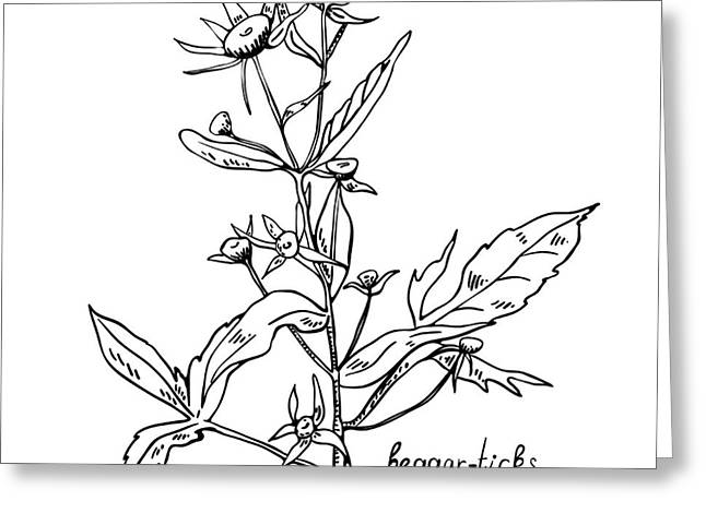 Monochrome Image Beggarticks Herb Greeting Card