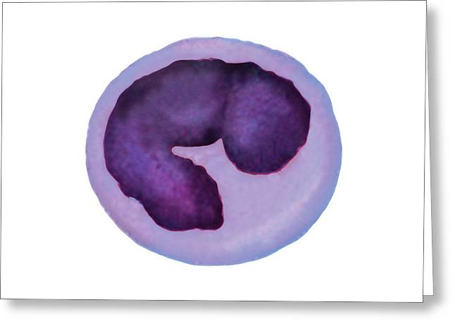 Monocyte Blood Cell Greeting Card