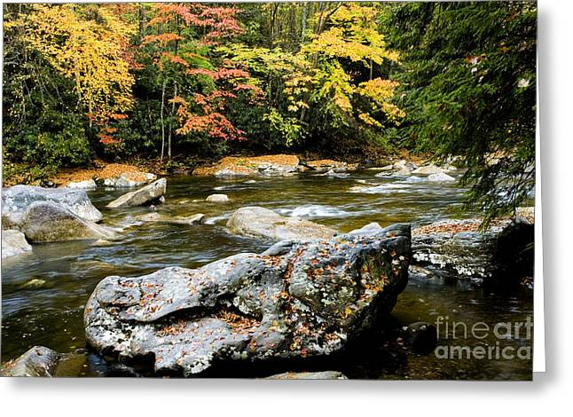 Monongahela National Forest Cranberry River Greeting Card by Thomas R Fletcher