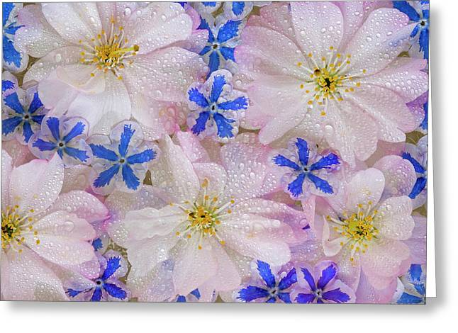 Montage Of Cherry Blossoms And Blue Greeting Card