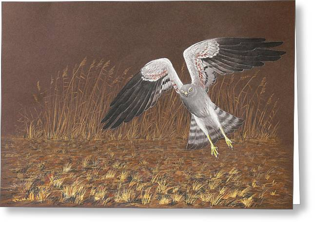 Montagus Harrier Greeting Card by Deak Attila