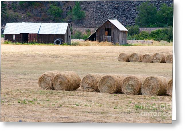 Greeting Card featuring the photograph Montana Bales by Vinnie Oakes