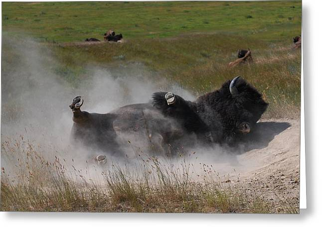 Montana Bison 1 Greeting Card by T C Brown