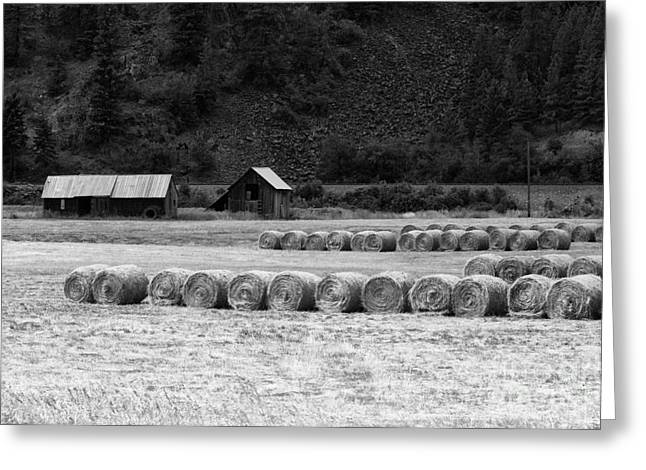 Greeting Card featuring the photograph Montana Harvest B/w by Vinnie Oakes