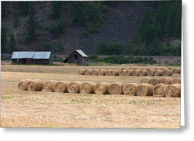 Greeting Card featuring the photograph Montana Hay Harvest by Vinnie Oakes