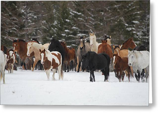 Montana Herd Greeting Card