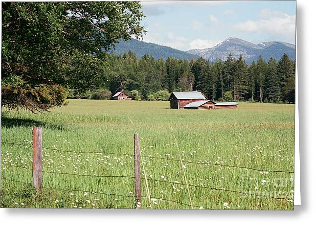 Montana Homestead Greeting Card by Vinnie Oakes