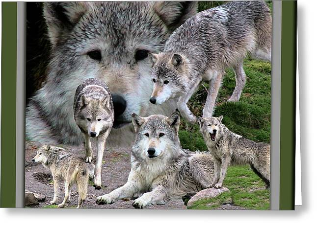 Montana Wolf Pack Greeting Card