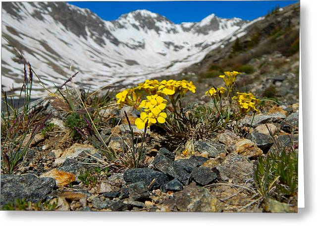 Blue Lakes Colorado Wildflowers Greeting Card