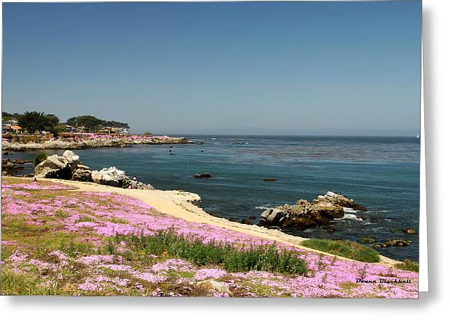Monterey Bay Greeting Card by Donna Blackhall