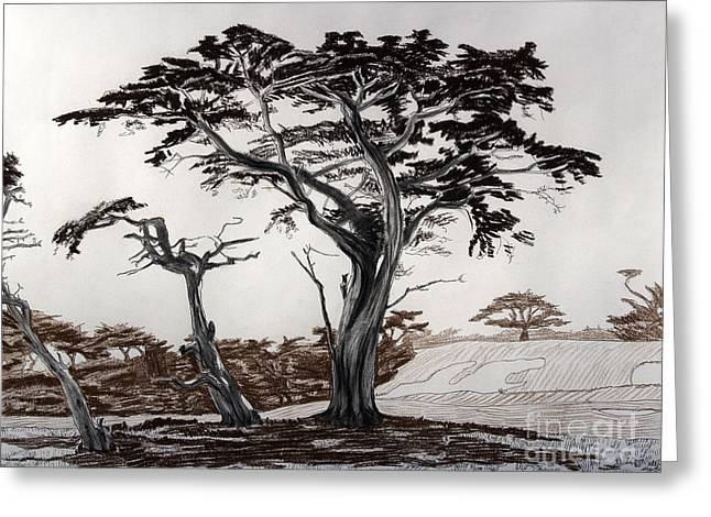 Monterey Cypresses Greeting Card