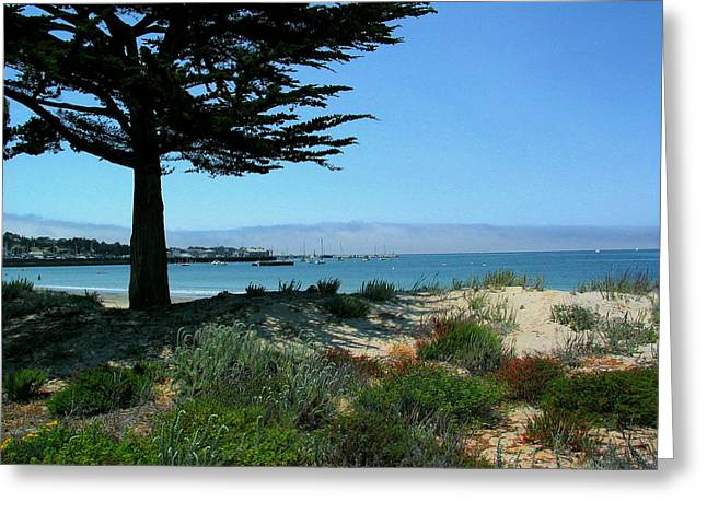 Monterey Dunes Greeting Card