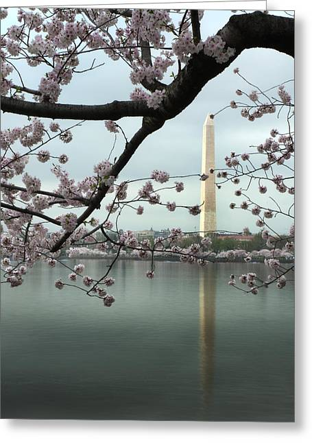 Monumental Blossoms Greeting Card by Zachary Hitchcock