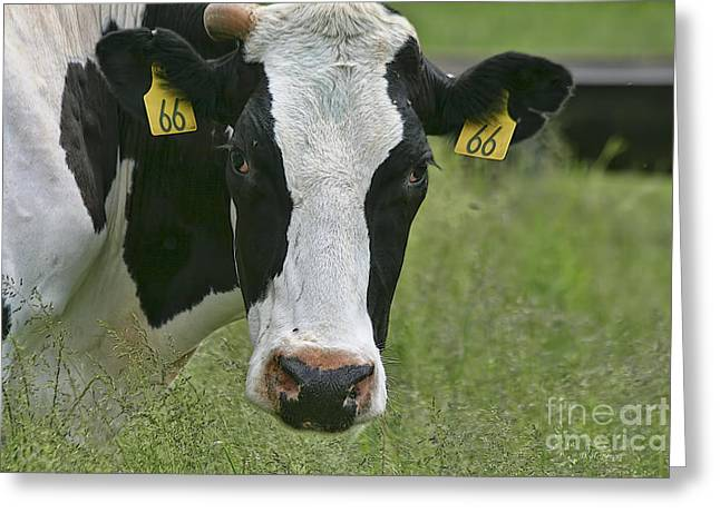Moo Moo Eyes Greeting Card by Deborah Benoit