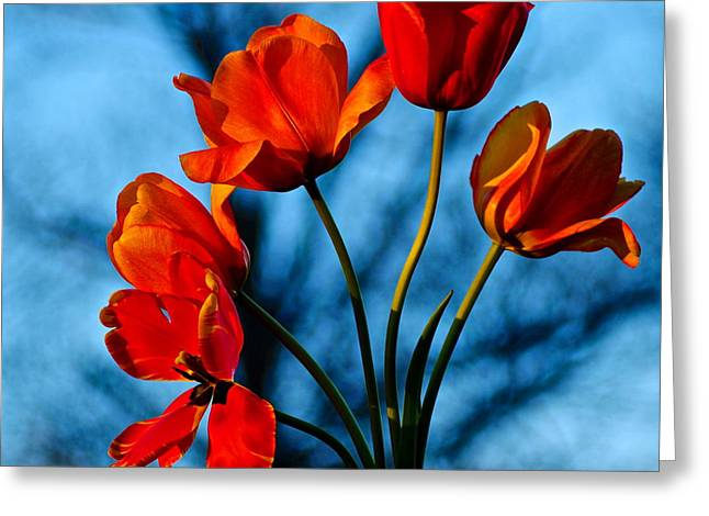 Mood Bouquet Greeting Card by Frozen in Time Fine Art Photography