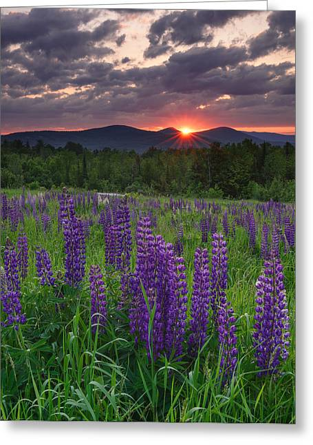 Moody Sunrise Over Lupine Field Greeting Card