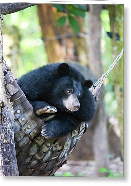 Moon Bears Are A Rare Sight Greeting Card by Micah Wright