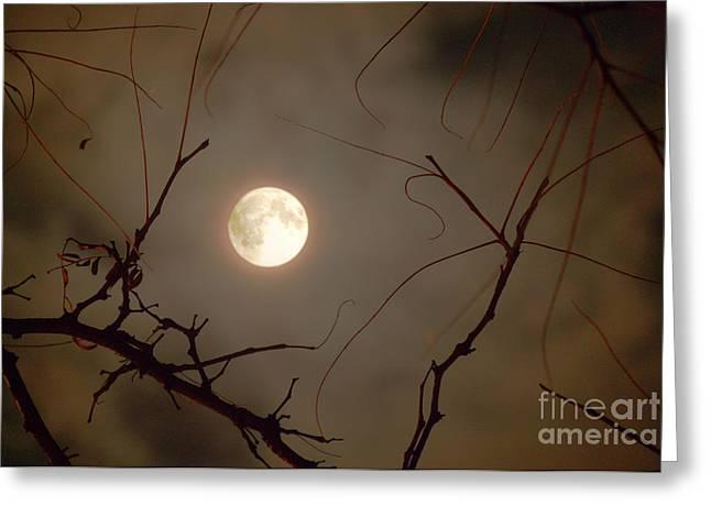 Moon Behind Branches Greeting Card by Deborah Smolinske