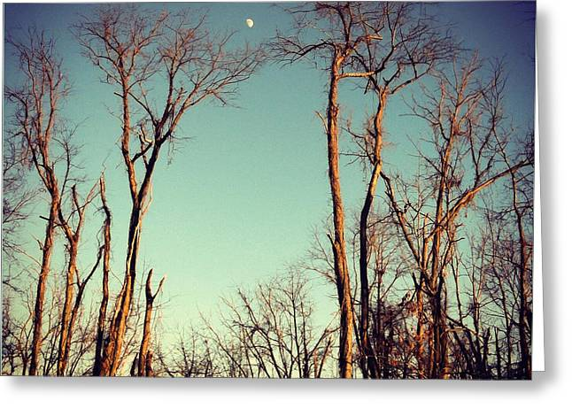 Greeting Card featuring the photograph Moon Between The Trees by Kerri Farley