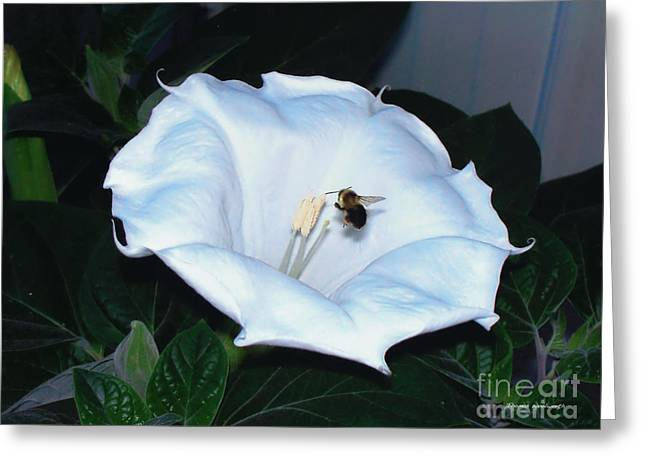 Greeting Card featuring the photograph Moon Flower by Thomas Woolworth