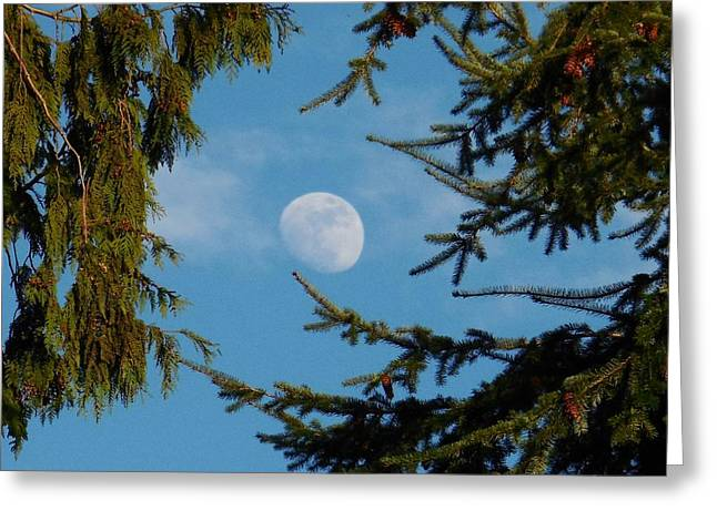 Moon Framed By Trees Greeting Card