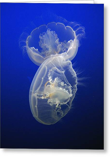 Moon Jelly Pair Greeting Card