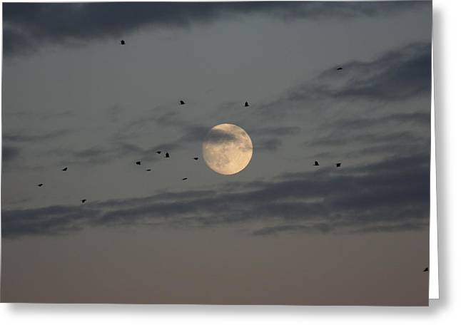 Greeting Card featuring the photograph Moon Lighting The Way by Paula Brown