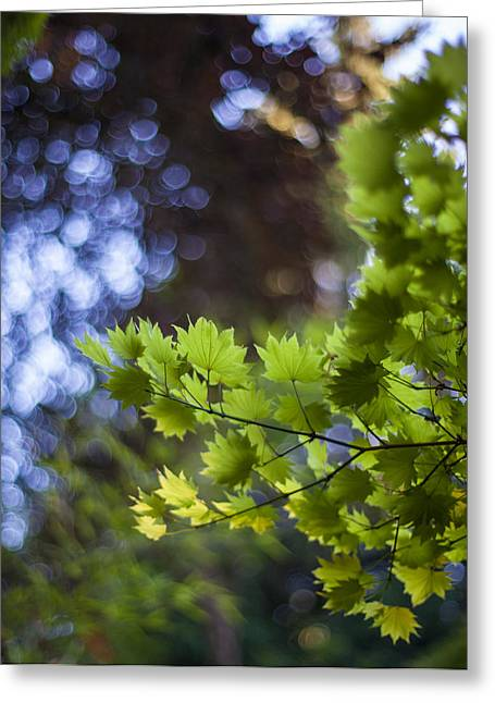 Moon Maples Montage Greeting Card by Mike Reid
