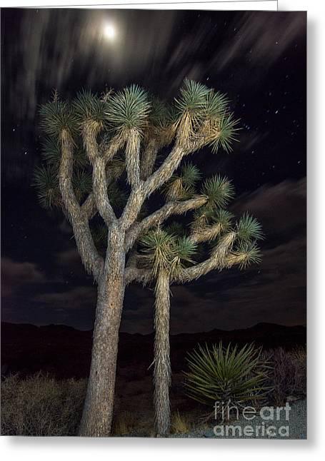 Moon Over Joshua - Joshua Tree National Park In California Greeting Card by Jamie Pham