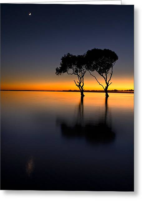 Moon Over Mangrove Trees Greeting Card
